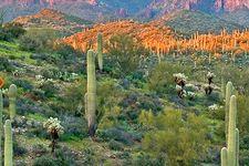 11177 N Oracle Rd, Tucson, AZ 85737
