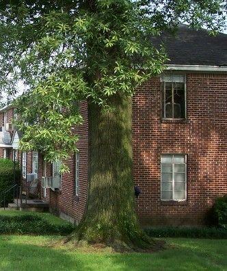 1009 Flint St, Jonesboro, AR 72401